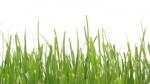 timelapse grass
